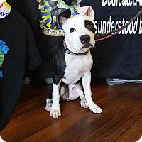 Adopt A Pet :: LuLu - Southampton, PA