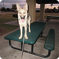 Adopt A Pet :: Ava Von Altenberg - Phoenix, AZ