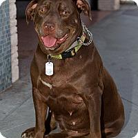 Adopt A Pet :: MISTY - Ojai, CA