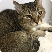 Adopt A Pet :: Jojo - Medina, OH