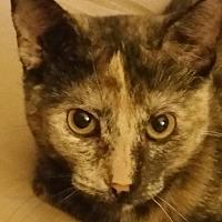 Adopt A Pet :: Shelby - Nuevo, CA
