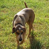 Adopt A Pet :: Bobby W - Olympia, WA