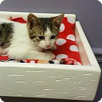 Adopt A Pet :: Pilgrim - Medina, OH