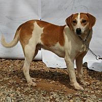 Adopt A Pet :: Max - Ashland, AL