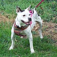 Adopt A Pet :: Celeste - Durham, NC