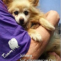 Adopt A Pet :: Johnny - Irvine, CA