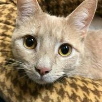 Adopt A Pet :: Charlie - Elk Grove Village, IL