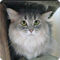 Adopt A Pet :: Fancy - Madison, TN