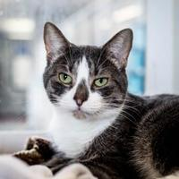 Adopt A Pet :: Pickles - Windsor, ON