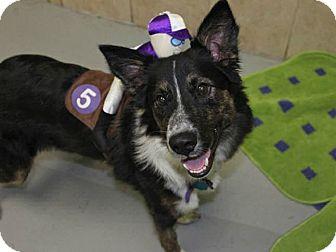 Border Collie Mix Dog for adoption in Austin, Texas - Tuco