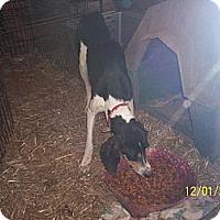 Adopt A Pet :: Tater - Wedowee, AL