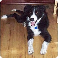 Adopt A Pet :: Jaffe - Salt Lake City, UT