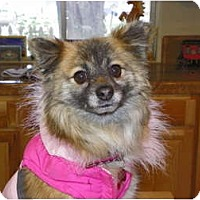 Adopt A Pet :: CELINE - Hesperus, CO