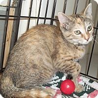 Adopt A Pet :: Tortie - Acme, PA