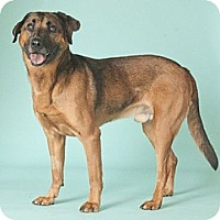 Adopt A Pet :: Ty*ADOPTED!* - Chicago, IL