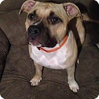 Adopt A Pet :: Olaf - Wichita, KS