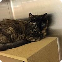 Adopt A Pet :: Toni - Colmar, PA