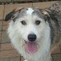 Australian Shepherd Mix Dog for adoption in Lexington, Kentucky - Luna