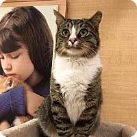 Adopt A Pet :: Wyatt - Jackson, NJ