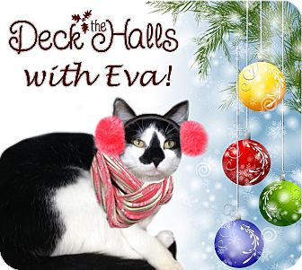 Domestic Shorthair Cat for adoption in East Brunswick, New Jersey - Eva