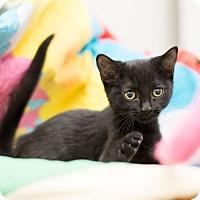 Adopt A Pet :: Drake - Fountain Hills, AZ