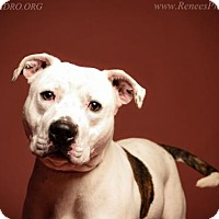 Adopt A Pet :: Louie - Blacklick, OH