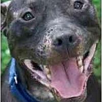 Adopt A Pet :: Bobbie Bouche - Dallas, GA