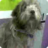 Adopt A Pet :: Tanner-ADOPTION PENDING - Boulder, CO