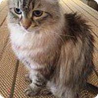 Adopt A Pet :: Ralston - Novato, CA