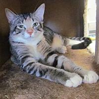 Adopt A Pet :: Bon Bon - San Leon, TX