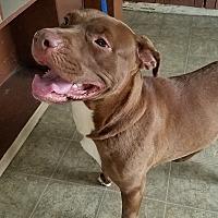 Adopt A Pet :: Ashley - California City, CA