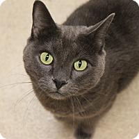 Adopt A Pet :: Jacques - Naperville, IL