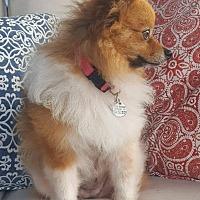 Adopt A Pet :: Popi - conroe, TX