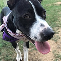 Adopt A Pet :: Lala - Austin, TX