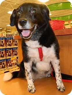 Border Collie/Border Terrier Mix Dog for adoption in Umatilla, Florida - Domino