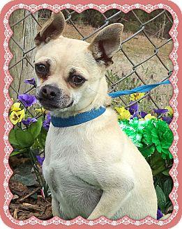 Chihuahua Mix Dog for adoption in Marietta, Georgia - SWEET PEA