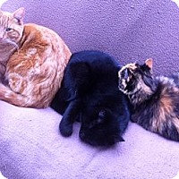 Adopt A Pet :: Marbles - Piscataway, NJ