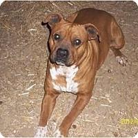 Adopt A Pet :: Apollo - Farmingtoon, MO