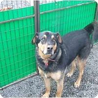 Adopt A Pet :: Louie - Surrey, BC