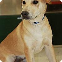 Adopt A Pet :: Riley - Phoenix, AZ