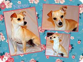 Chihuahua Mix Puppy for adoption in Corpus Christi, Texas - Naomi