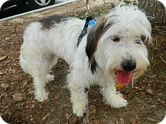 Terrier (Unknown Type, Small) Mix Dog for adoption in Umatilla, Florida - Precious