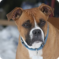 Adopt A Pet :: Baby Boy - Hudson, NH