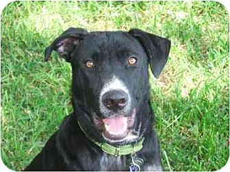 Labrador Retriever Mix Dog for adoption in Lavon, Texas - Tuff