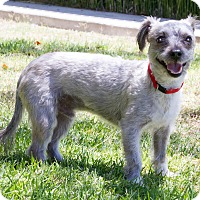 Adopt A Pet :: Pappy - Encino, CA