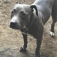 Adopt A Pet :: Piper - Bakersfield, CA