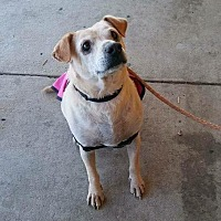 Adopt A Pet :: Dio - Wichita, KS