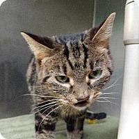 Adopt A Pet :: Rayna - Port Clinton, OH