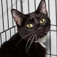Adopt A Pet :: Glenna - Columbus, OH