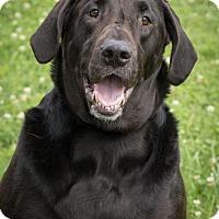 Adopt A Pet :: Dexter - Alpharetta, GA